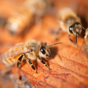 Why Save the Bees Efforts Matter