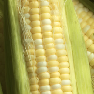 Corn Kernels