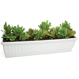 Easy-to-Grow Container Greens